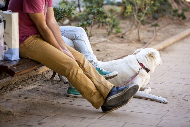 כלב ואיש